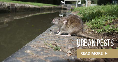 urban-pests