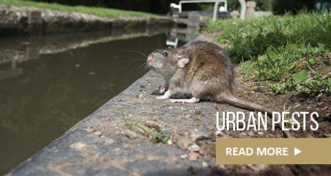urban-pests